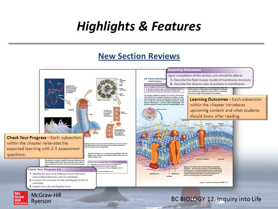 Highlights & Features New Section Reviews