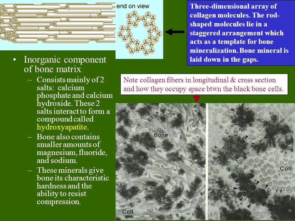 Inorganic component of bone matrix