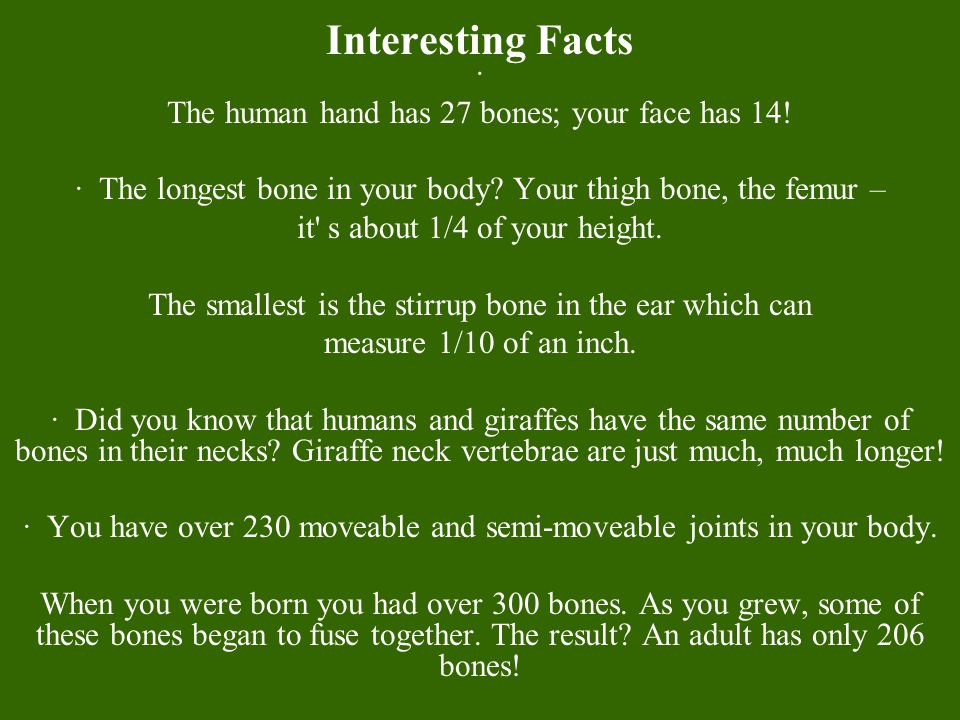 Interesting Facts · The human hand has 27 bones; your face has 14!