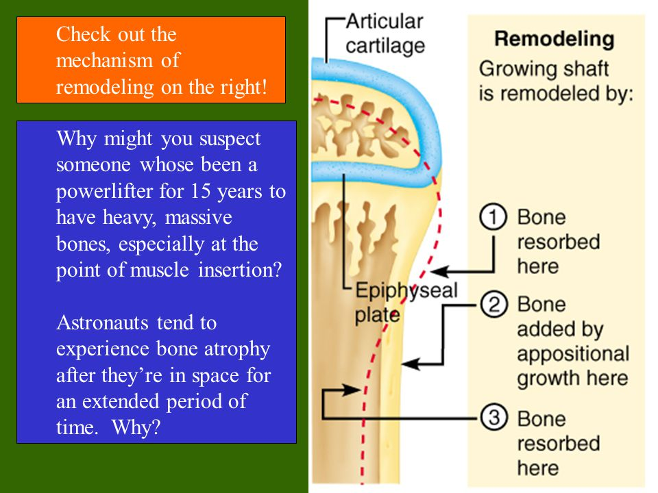 Check out the mechanism of remodeling on the right!