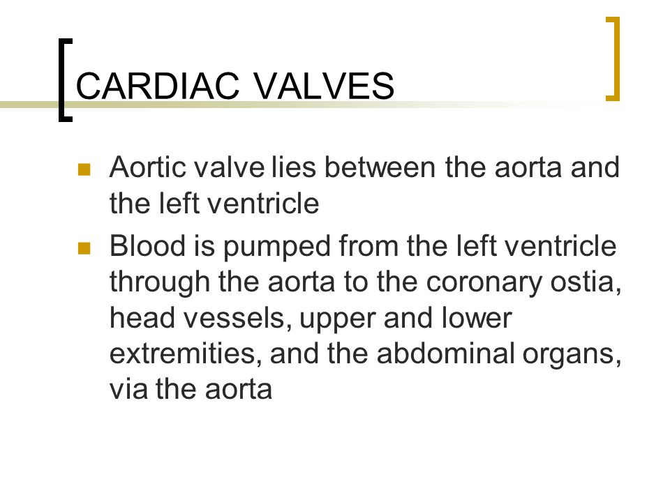 CARDIAC VALVES Aortic valve lies between the aorta and the left ventricle.