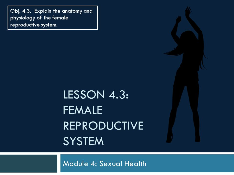 Lesson 4.3: Female Reproductive System