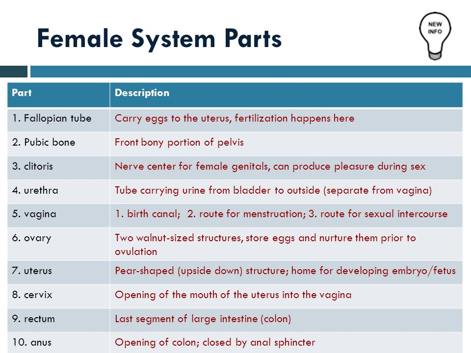 Female System Parts Part Description 1. Fallopian tube