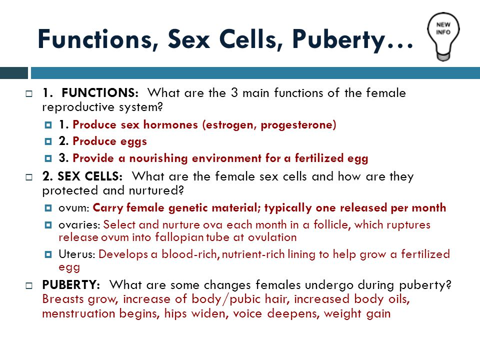 Functions, Sex Cells, Puberty…