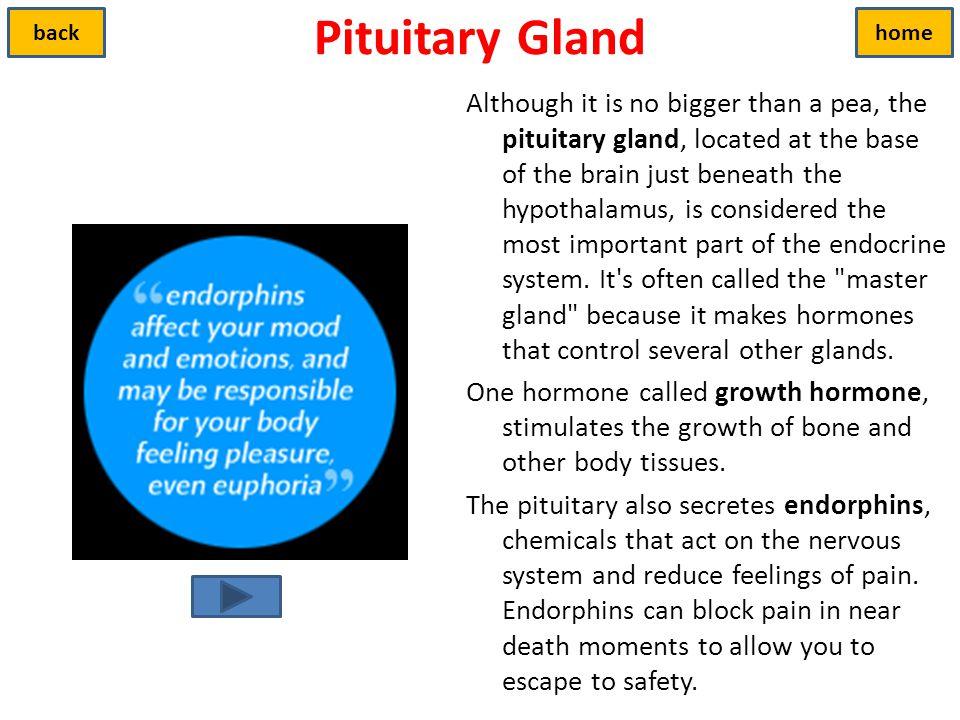 Pituitary Gland back. home.