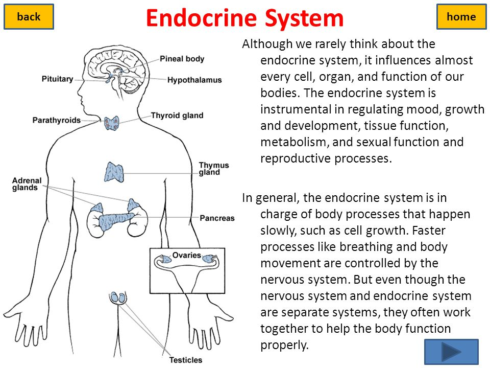 Endocrine system review worksheet answers