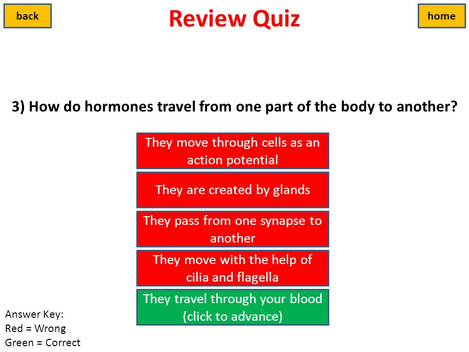 3) How do hormones travel from one part of the body to another