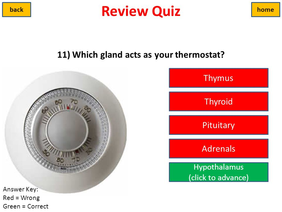 11) Which gland acts as your thermostat