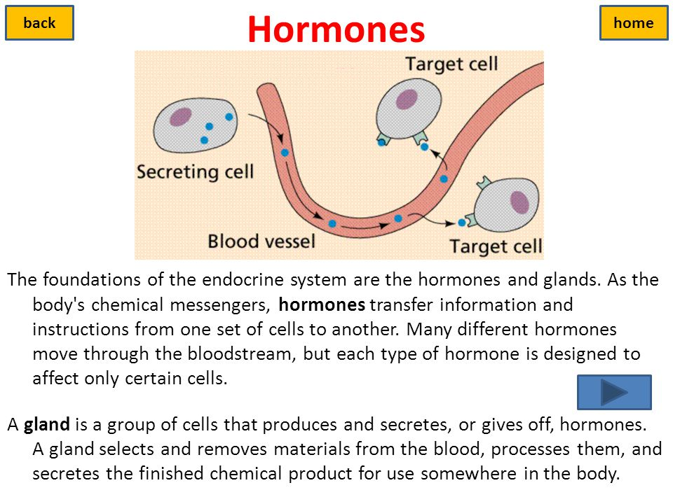 Hormones back. home.