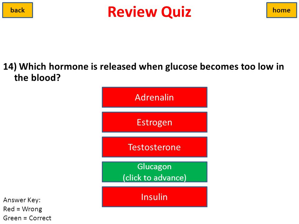 Review Quiz back. home. 14) Which hormone is released when glucose becomes too low in the blood Adrenalin.