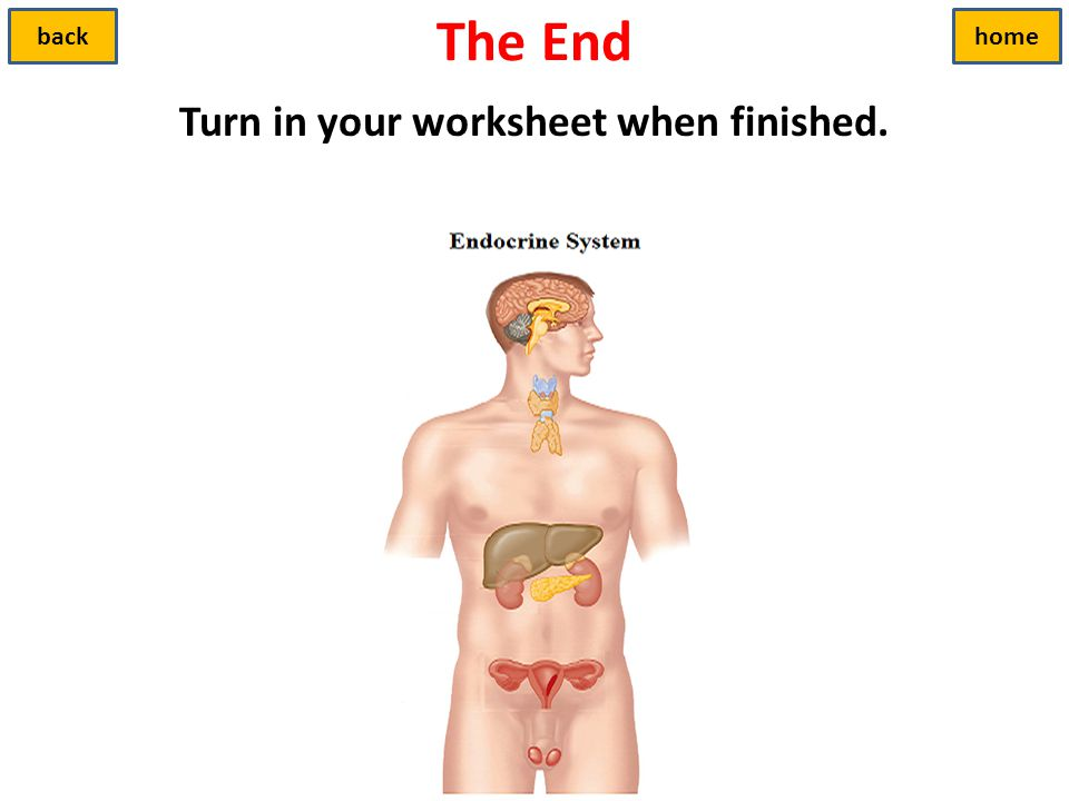 Turn in your worksheet when finished.