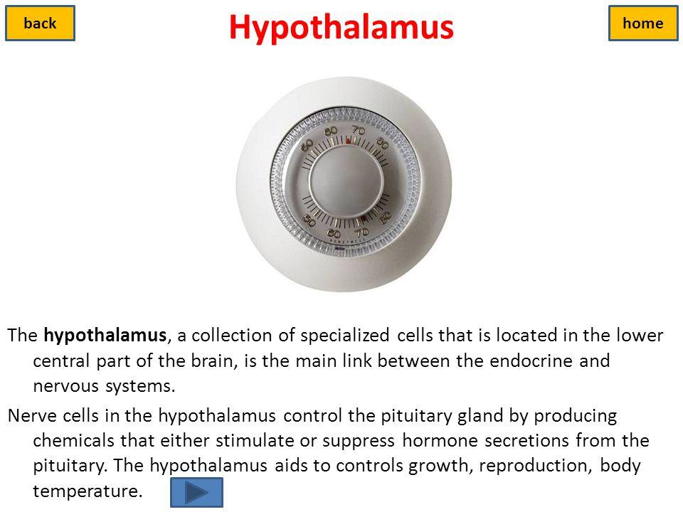 Hypothalamus back. home.