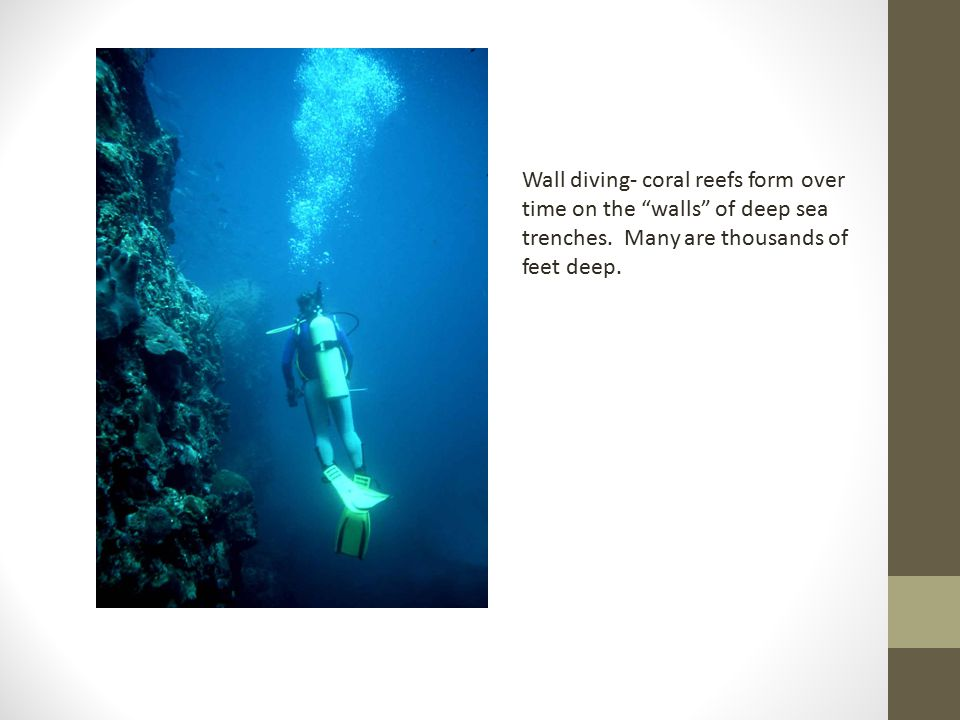 Wall diving- coral reefs form over time on the walls of deep sea trenches.