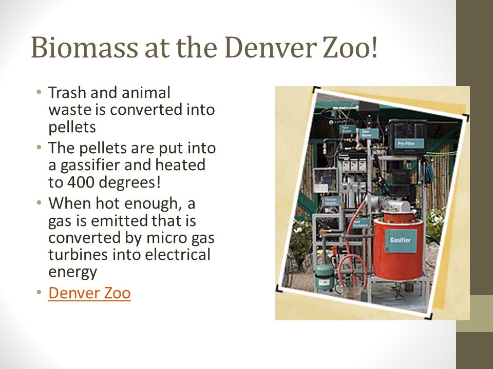 Biomass at the Denver Zoo!