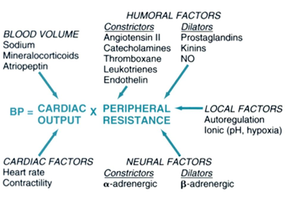 Always know that hypertension can be understood best by remembering the simple BP=COxPR equation.