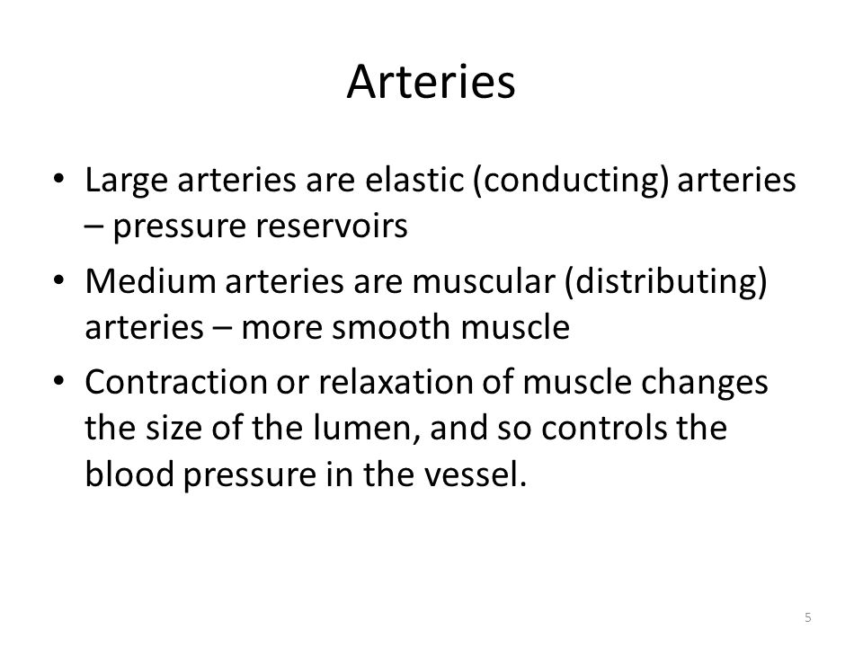 Arteries Large arteries are elastic (conducting) arteries – pressure reservoirs.