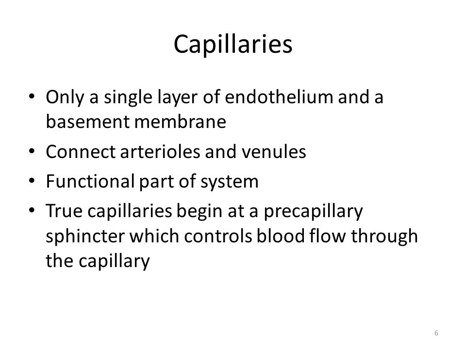 Capillaries Only a single layer of endothelium and a basement membrane