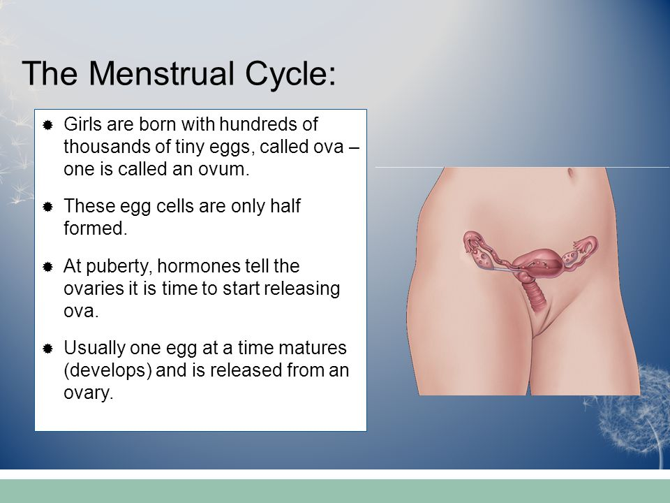 The Menstrual Cycle: Girls are born with hundreds of thousands of tiny eggs, called ova – one is called an ovum.