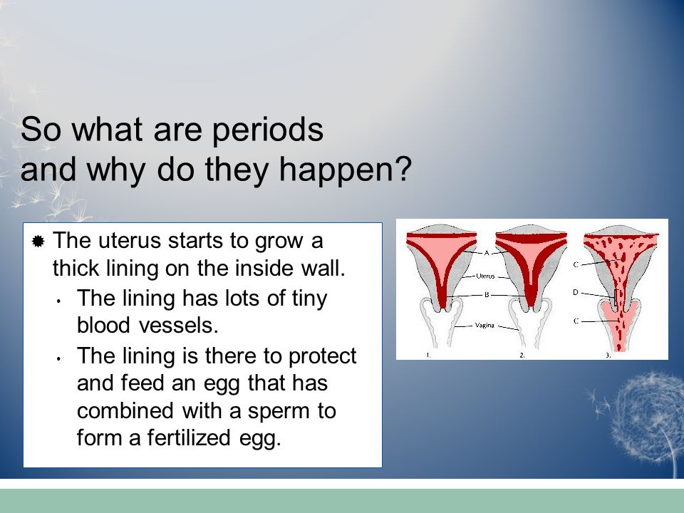 So what are periods and why do they happen