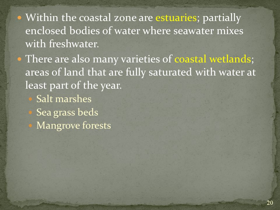 Within the coastal zone are estuaries; partially enclosed bodies of water where seawater mixes with freshwater.