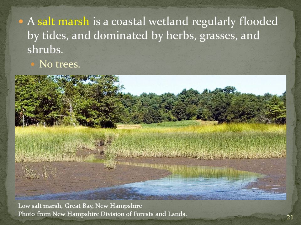 A salt marsh is a coastal wetland regularly flooded by tides, and dominated by herbs, grasses, and shrubs.