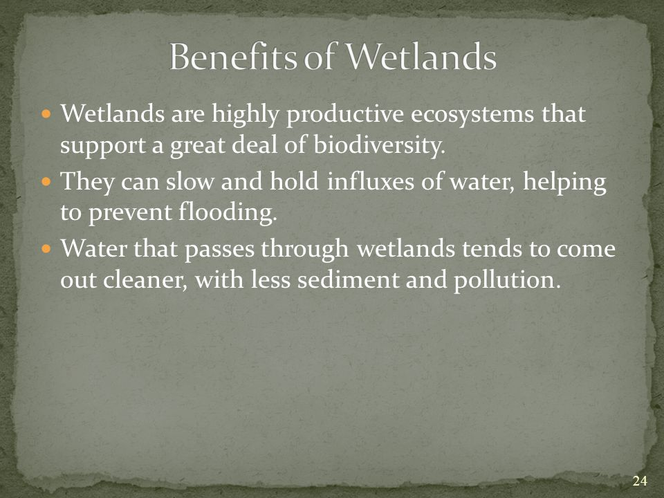 Benefits of Wetlands Wetlands are highly productive ecosystems that support a great deal of biodiversity.