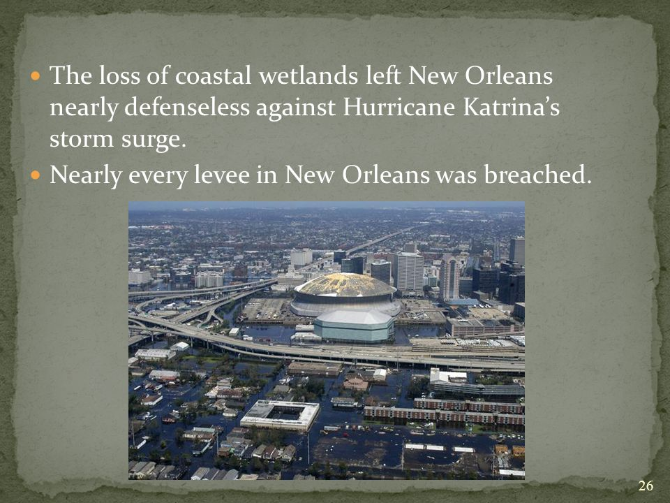 The loss of coastal wetlands left New Orleans nearly defenseless against Hurricane Katrina's storm surge.