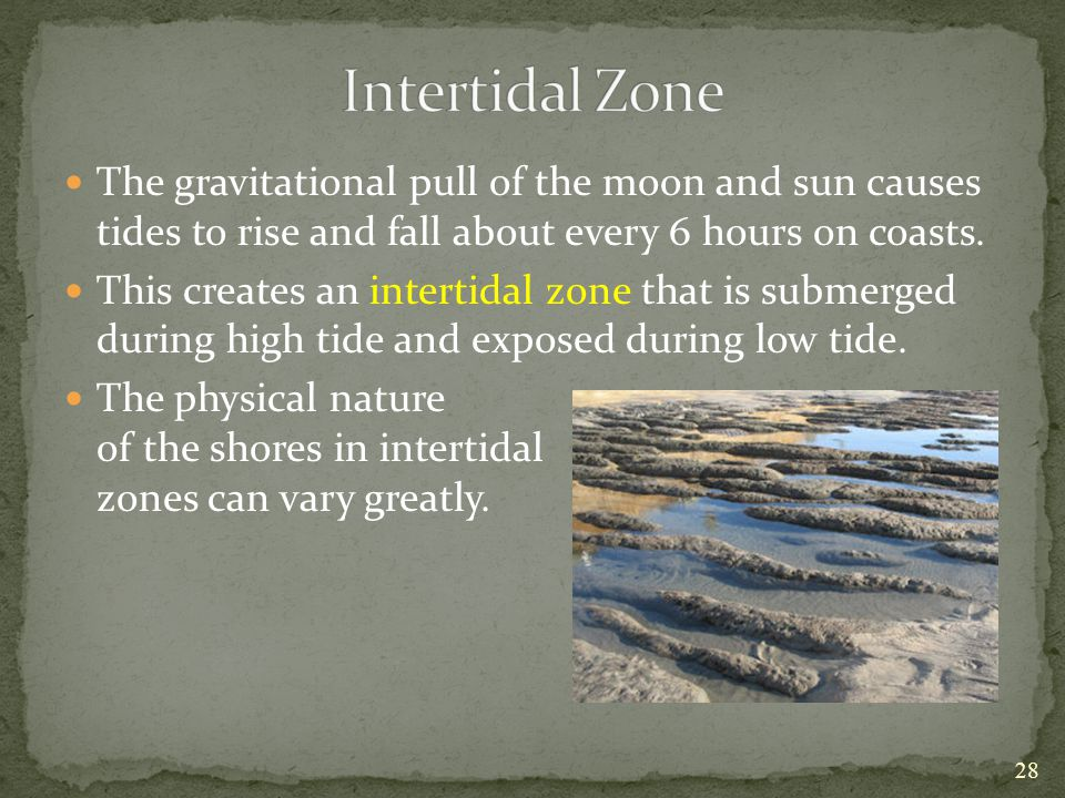 Intertidal Zone The gravitational pull of the moon and sun causes tides to rise and fall about every 6 hours on coasts.