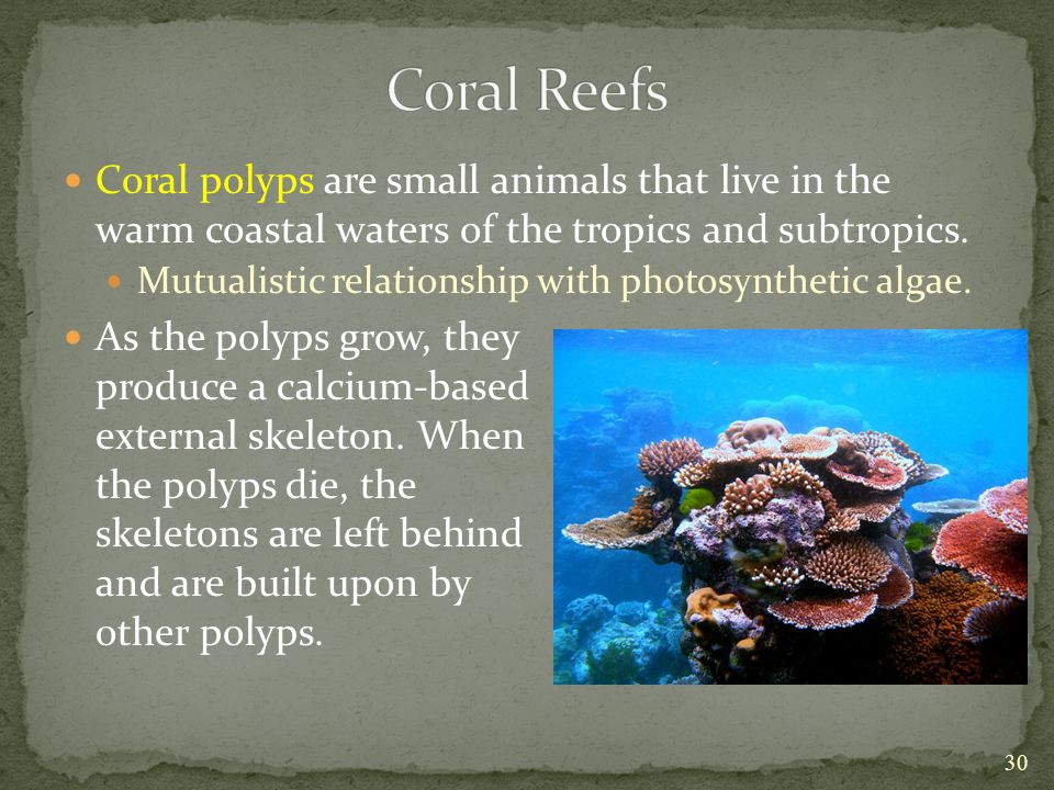 Coral Reefs Coral polyps are small animals that live in the warm coastal waters of the tropics and subtropics.