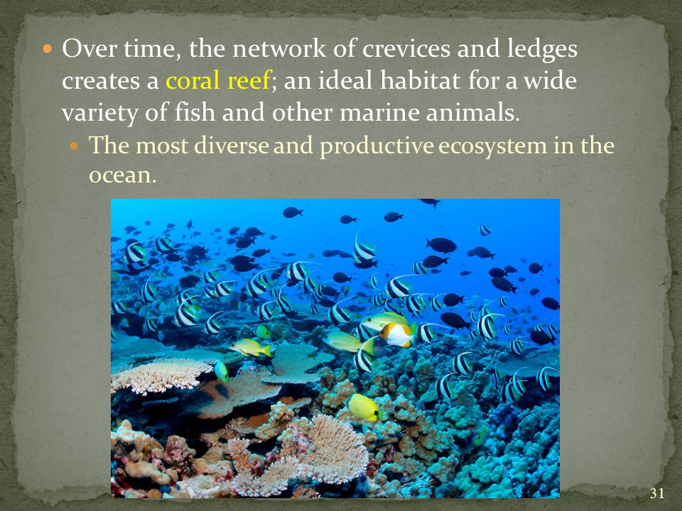 Over time, the network of crevices and ledges creates a coral reef; an ideal habitat for a wide variety of fish and other marine animals.