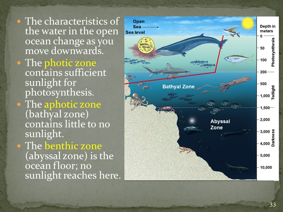 The characteristics of the water in the open ocean change as you move downwards.