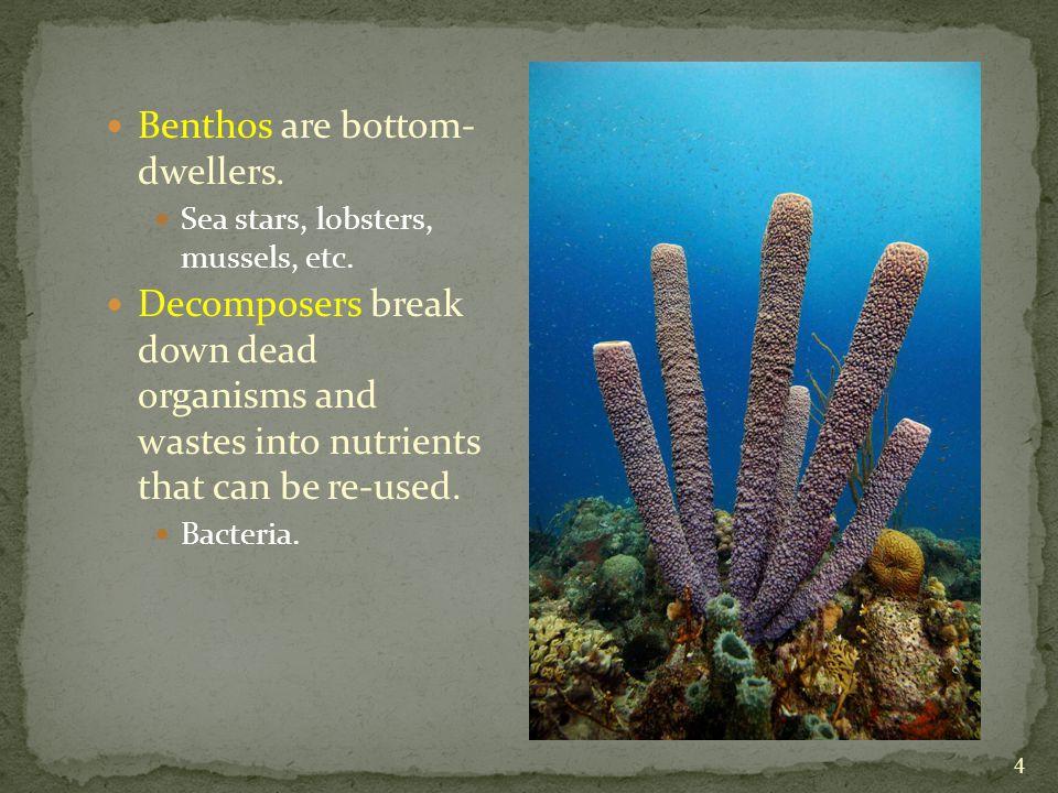 Benthos are bottom- dwellers.