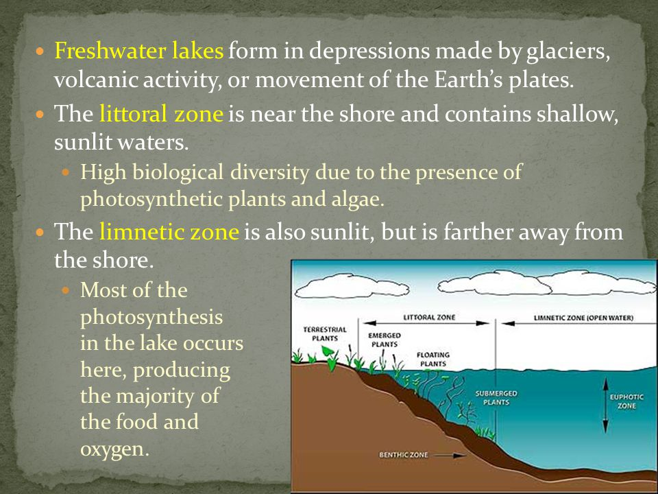 The limnetic zone is also sunlit, but is farther away from the shore.