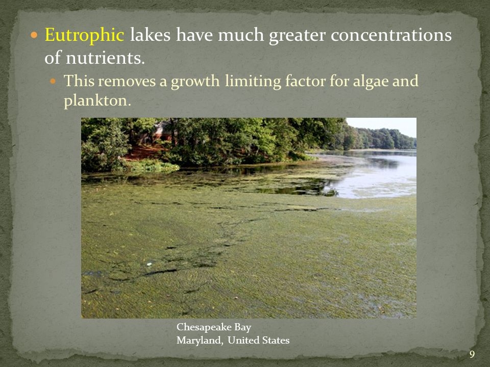 Eutrophic lakes have much greater concentrations of nutrients.