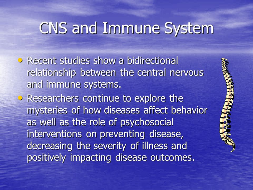 CNS and Immune System Recent studies show a bidirectional relationship between the central nervous and immune systems.