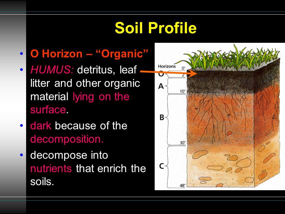 Soil Profile O Horizon – Organic