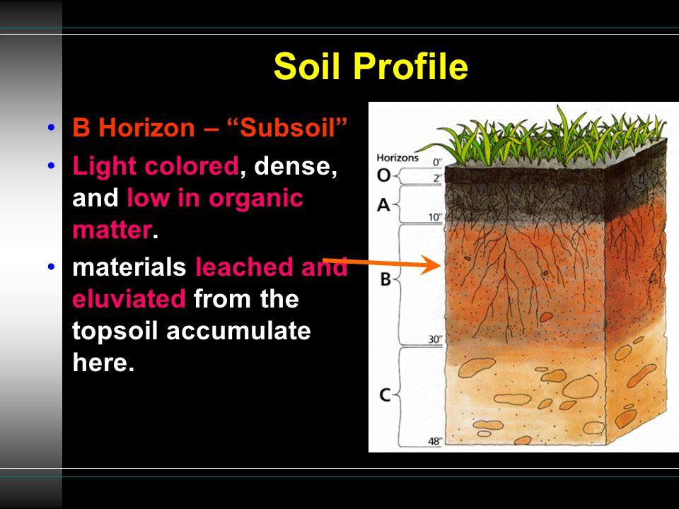 Soil Profile B Horizon – Subsoil