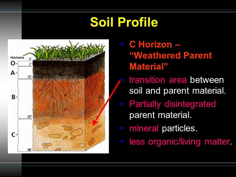 Soil Profile C Horizon – Weathered Parent Material