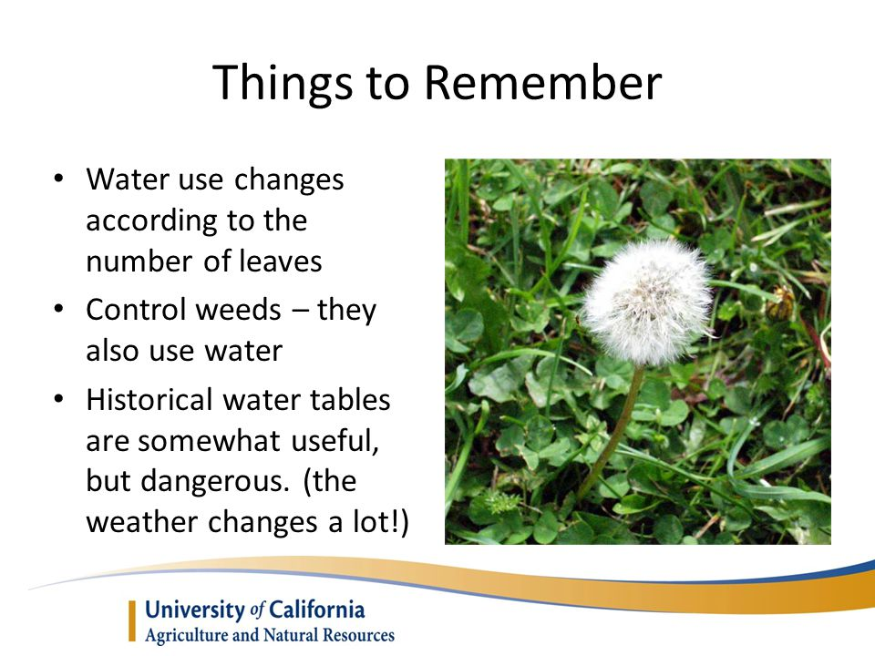 Things to Remember Water use changes according to the number of leaves
