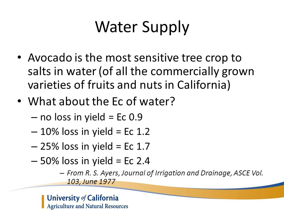Water Supply Avocado is the most sensitive tree crop to salts in water (of all the commercially grown varieties of fruits and nuts in California)