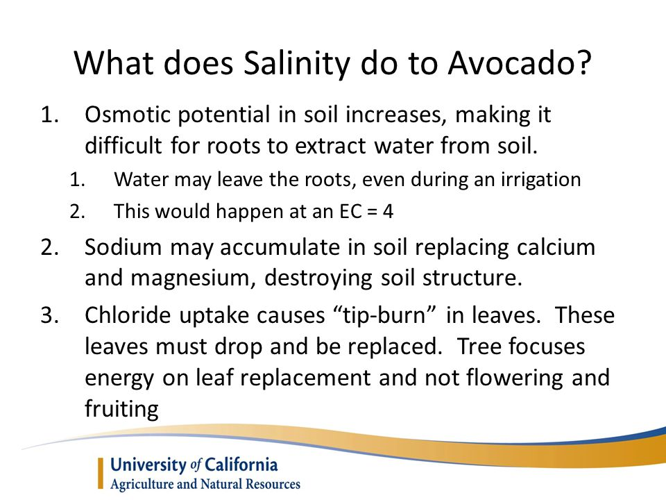 What does Salinity do to Avocado