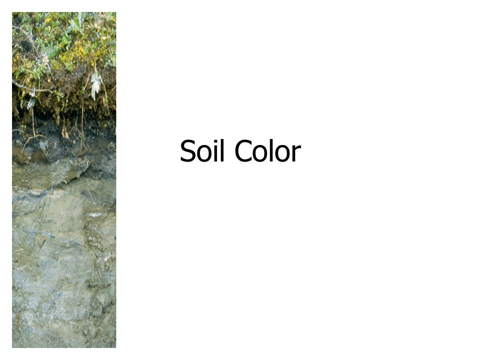 Soil Color