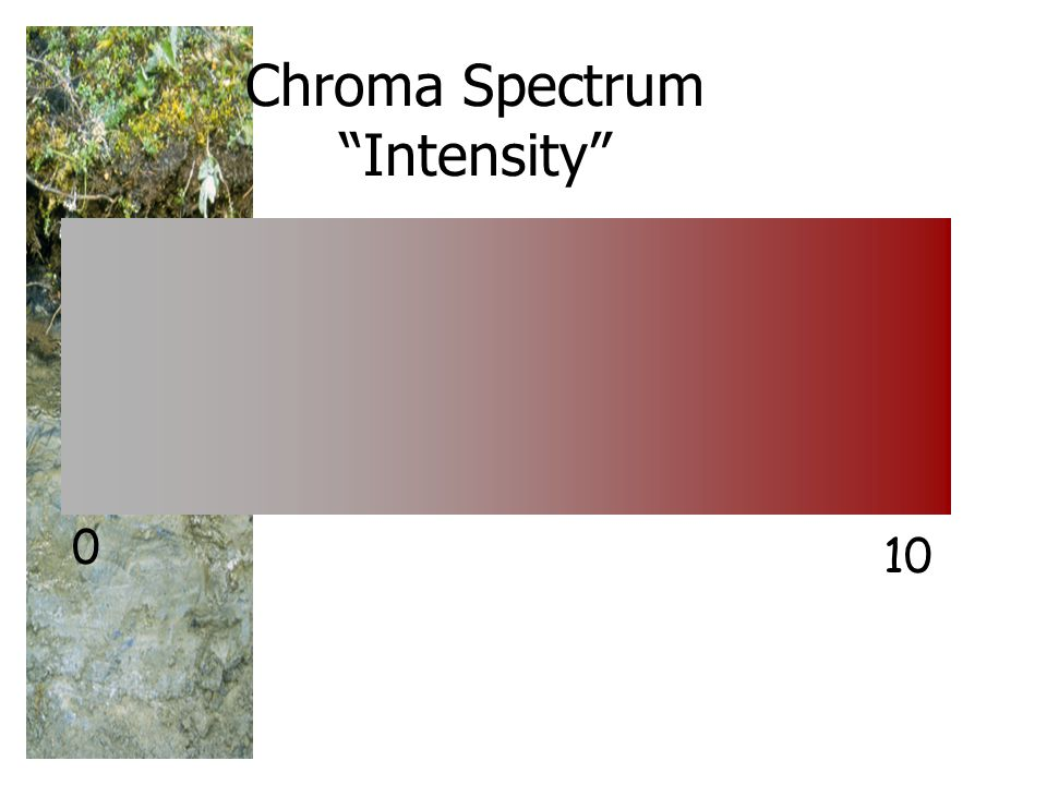 Chroma Spectrum Intensity