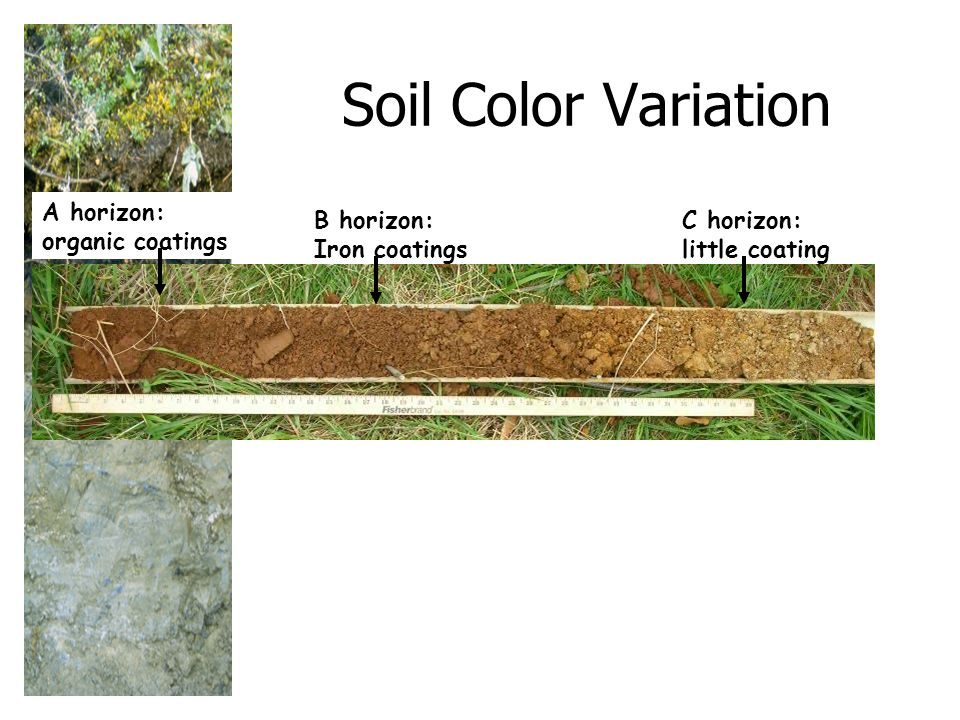 Soil Color Variation A horizon: organic coatings