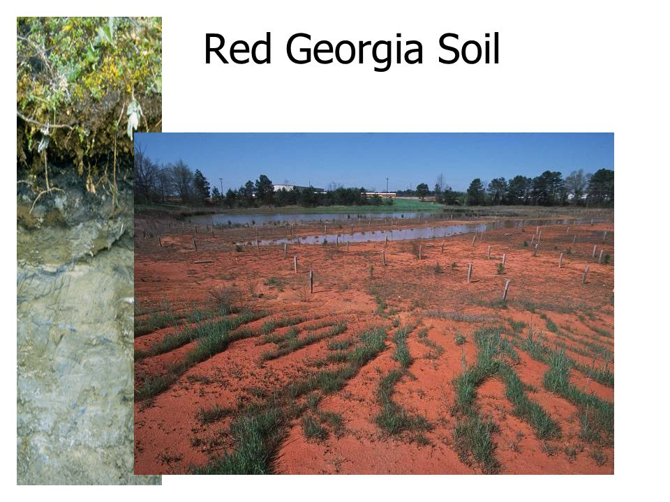 Red Georgia Soil