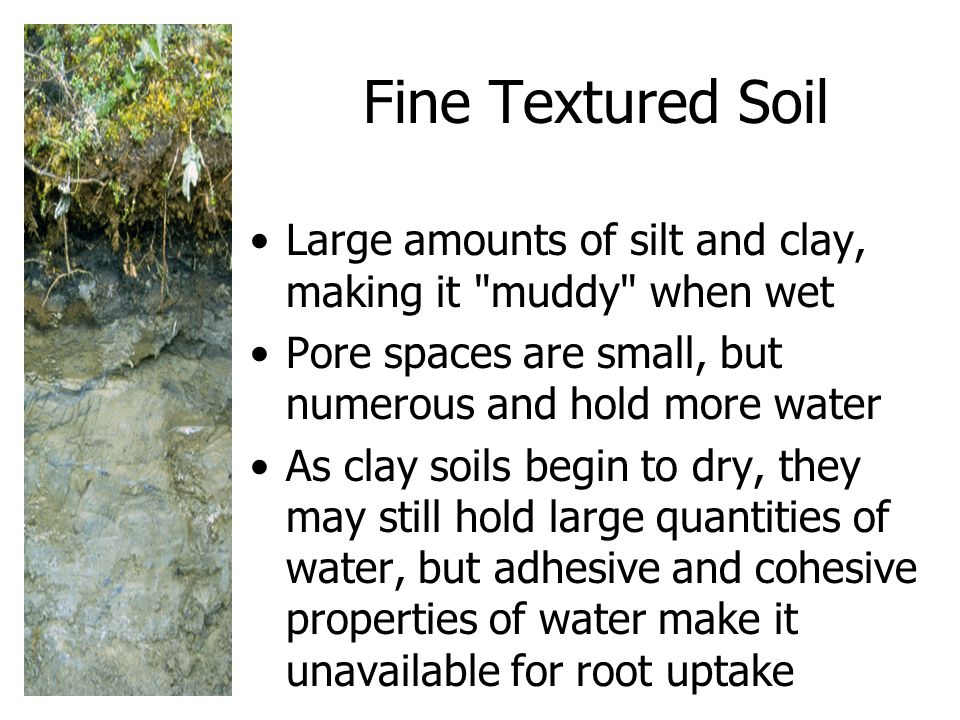 Fine Textured Soil Large amounts of silt and clay, making it muddy when wet Pore spaces are small, but numerous and hold more water.