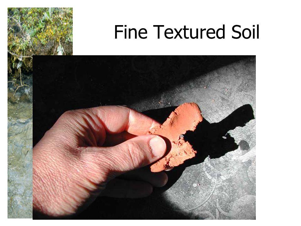Fine Textured Soil