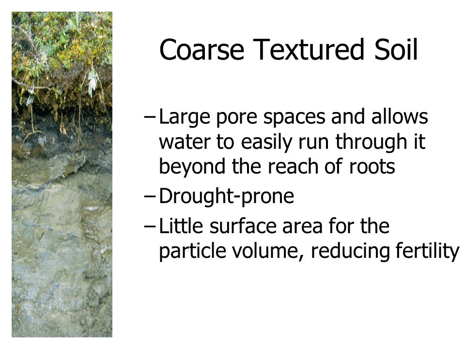 Coarse Textured Soil Large pore spaces and allows water to easily run through it beyond the reach of roots.