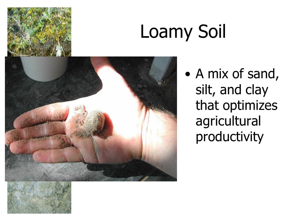 Loamy Soil A mix of sand, silt, and clay that optimizes agricultural productivity