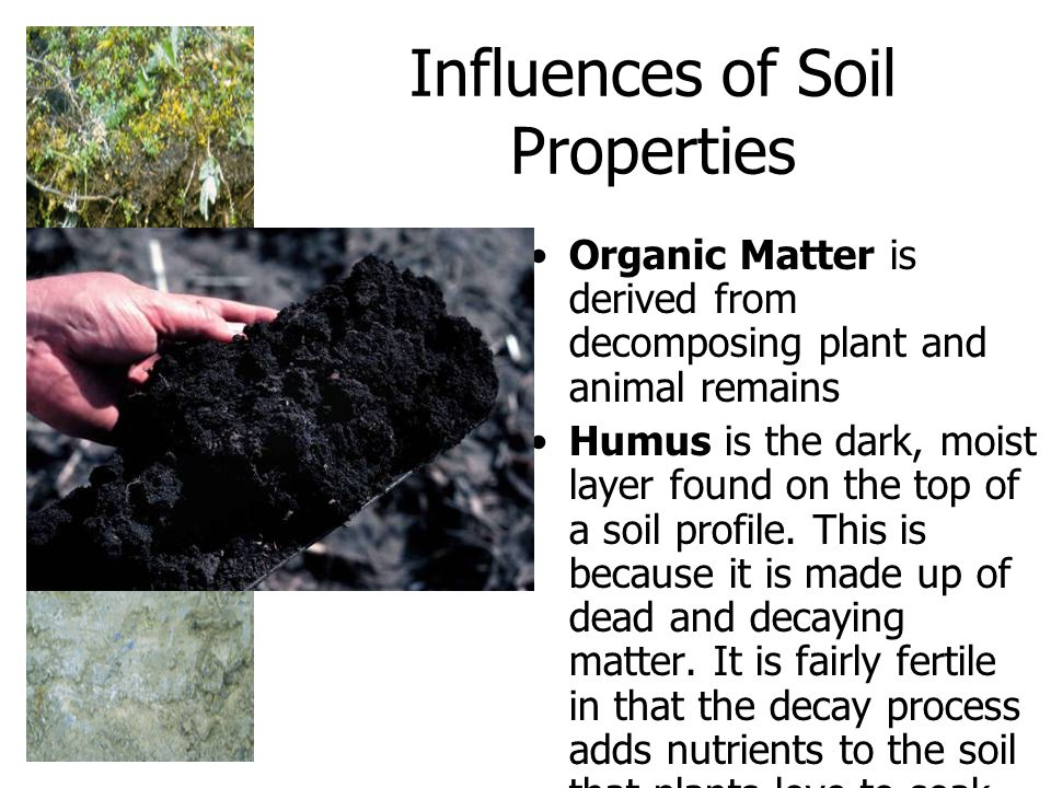 Influences of Soil Properties